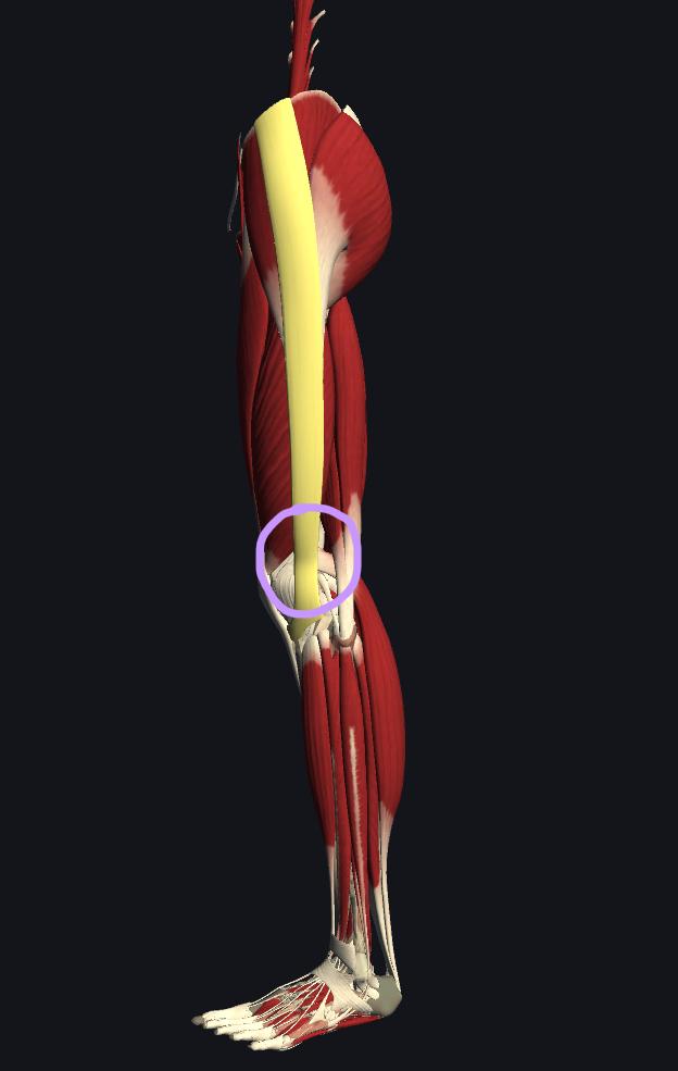 マラソン・腸脛靭帯炎